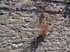 stonewall w brush