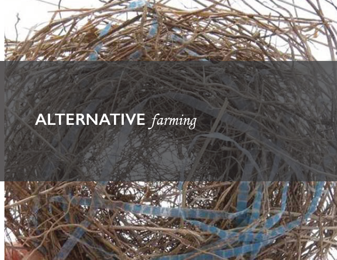 Alternative Farming